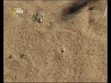 Природа и животные: Дикий Запад - пустыня